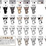 ネコの模様の説明