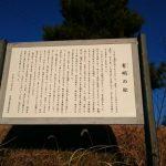茨城県石岡市 有明の松